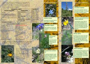 Triptico Herbaceas-2